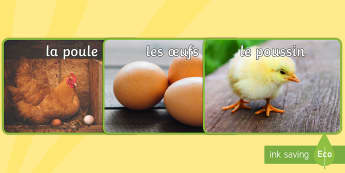 Photos : Le cycle de vie de la poule Photos d''affichage - poule, cycle de vie, sciences, cycle 1, cycle 2, cycle 3, hen, chicken, life cycle, Pâques, Easter,