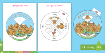 Brenda's Boring Egg Life Cycle of a Duck Spin Wheel Activity - twinkl originals, fiction, KS1, EYFS, science, Animals, Life cycle