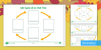 Little Acorns Life Cycle of an Oak Tree Differentiated Activity Sheet - KS1, seasons, Little Acorns, worksheet, seed, sapling, british trees, tree, plants, growing, ks1