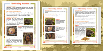 Don't Hog the Hedge! Hibernating Animals Differentiated Reading Comprehension Activity - Twinkl Originals, Fiction, Autumn, Hibernate, Woodland, Animals, KS1, Guided Reading, Non-fiction
