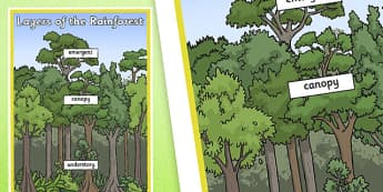 Layers of the Rainforest Large Display Poster - geography, display