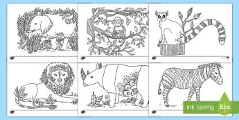 Sachunterricht Tiere Und Pflanzen Primary Resources 12 Klass