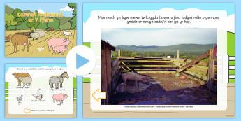 Pŵerbwynt Cartrefi Anifeiliaid Y Fferm Pŵerbwynt - Bywyd Newydd, Fferm, farm, new life, life cycles, cylchoedd bywyd, Fi fy hun a phethau byw eraill, G