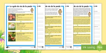 Compréhension écrite différenciée : Le cycle de vie de la poule - Poule, chicken, life, vie, science, cycle 2, cycle 3, egg, oeuf, chick, poussin, monde vivant,French