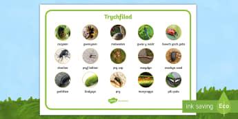 Mat Geiriau Trychfilod (lluniau manwl) - Trychfilod, Minibeasts, insects, Wales, display, Welsh, Gwybodaeth a Dealltwriaeth o'r Byd, Gwyboda