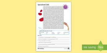 Specialised Cells Word Search  - undifferentiated, phloem, xylem, root hair, muscle