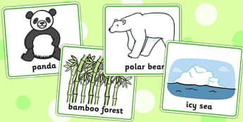 Matching Cards Bears and Habitats - matching, bears, habitats