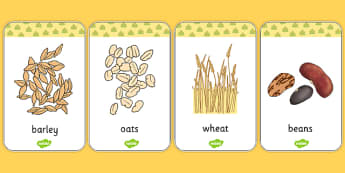 Harvest Grains Flash Cards - harvest, flash cards, grains, autumn