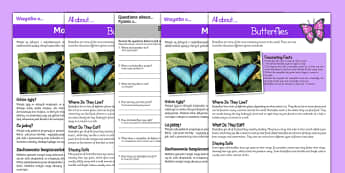 Butterfly Reading Comprehension English/Polish