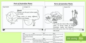 The Parts of Australian Plants Activity Sheet - Australian Curriculum Biological sciences, plant parts, Australian plants, Australian plant parts, p