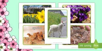 Pecyn Arddangos Lluniau Y Gwanwyn - Bywyd Newydd, Fferm, farm, new life, life cycles, cylchoedd bywyd, Fi fy hun a phethau byw eraill, G