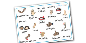 Scottish Gaelic My Body Word Mat - scottish gaelic, my body word mat, word mat, scottish my body, gaelic my body, language, languages, scotland, key words, gaels, celtic, literacy, aids, ourselves, bodies, body parts, arm, hand, eyes, ears, mouth, li
