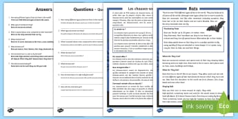 Bats Differentiated Reading Comprehension Activity English/French - Bats Reading Comprehension - bats, reading, comprehension, read, comprehesion, comprehnsion, reading