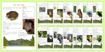 New Zealand Native Birds Fact File - nz, new zealand, Native birds, animals
