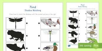 Pond Shadow Matching Activity Sheet - Visual Discrimination, Pond Unit, Science, Preschool, Pre-K
