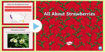 All About Strawberries PowerPoint - strawberries, strawberry plants, strawberry farming, strawberry picking, strawberry plant life cycle