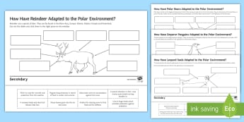 Polar Animal Adaptations Activity Pack - Polar, Animal adaptations, Polar Bear, Reindeer, Emperor Penguin, Leopard Seal, Arctic, Antarctic