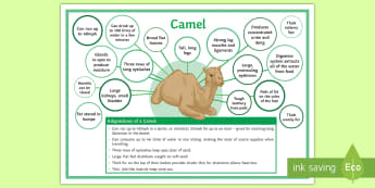 Adaptations of a Camel Display Poster - water, survival, extreme, environment, conditions, camel