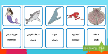 Under the Sea Matching Cards English/Arabic - Barry the fish with fingers, activity, image and word matching cards, wordmat, EAL Arabic,Arabic-tra