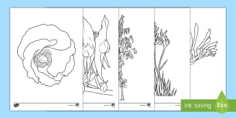 Australian Plants and Flowers Colouring Pages - Australian Curriculum Biological sciences, Australian flora, Australian flowers, floral emblems, gum
