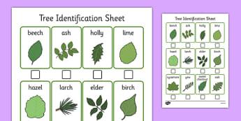 Tree Identification Sheet - tree, identification, sheet, tree identification, activity