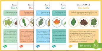 Baumsteckbriefe : DIN A6 Karteikarten - DE Herbst (Autumn), Jahreszeiten, Baum, Steckbrief, Deutsch, Kl.1/2,German