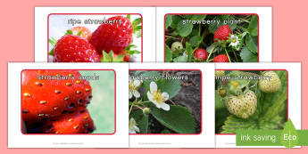 Strawberry Life Cycle Display Photos  - strawberries, strawberry plants, strawberry farming, strawberry picking, strawberry plant life cycle