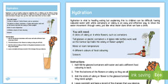Hydration Science Investigation - hydration, science, activity, flowers, colours, drink, suck, celery, carnation, thirst