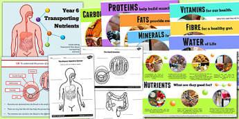 Year 6 Transporting Nutrients Teaching Pack - healthy eating