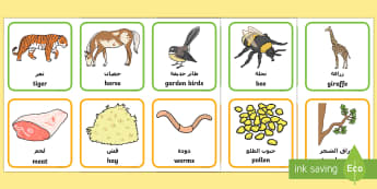 Animals and What They Eat Matching Cards Arabic/English - animal, matching, game, aniamls, mathching EAL Arabic,Arabic-translation