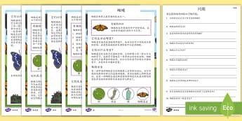 蝴蝶主题阅读理解 - 蝴蝶,动物,阅读理解,阅读,昆虫