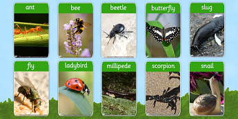 Minibeasts Photo Flash Cards - minibeast, visual aid, flashcards