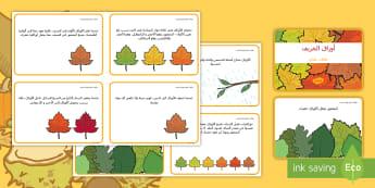 بطاقات حقائق أوراق الخريف - اليخضور، ضوء الشمس، ماء، المواسم، موسم سقوط الأوراق,Arab