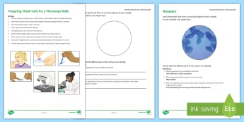 Preparing Cheek Cell Microscope Slide Investigation Instruction Sheet Print-Out - Investigation Help Sheet, science practical, method, instructions, microscope, cell, viewing cells,