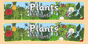 Plants Display Banner Romanian Translation - EAL, translated, bilingual, grow, science, nature