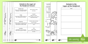 Animals in the Layers of the Amazon Rainforest Read and Draw Activity Sheet - World Around Us KS2 - Northern Ireland, rainforest, rainforest layers, amazon, rainforest animals, e