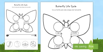 Butterfly Life Cycle Cut and Paste Activity Sheet - USA Early Childhood Science: Life Cycles, sequencing, butterfly life cycle, worksheet, life cycle ma
