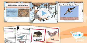 Science: Seasonal Changes (Autumn and Winter): Animals in Winter Year 1 Lesson Pack 6