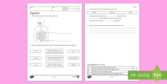 KS3 Digestion Homework Worksheet / Activity Sheet - Homework, digestion, digestive, digestive system, nutrition, eating, healthy lifestyle, enzymes, foo