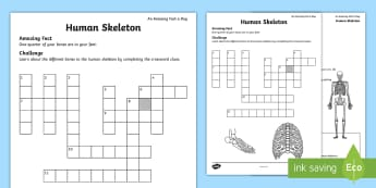 Human Skeleton Crossword - human skeleton, skeleton bones, parts of the body, bones, scientific skeleton
