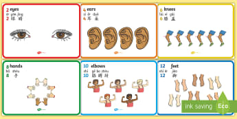 Body Parts Counting in 2s Display Posters English/Mandarin Chinese/Pinyin - Body Parts Display Posters Counting in 2s - Body parts, counting in 2s, my body, nose, eyes, ears, m