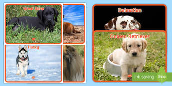 Dog Display Photos - reminiscence, pets, ideas, support, Pets as Therapy, Communication