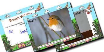 British Wildlife Land Air Sea Habitat PowerPoint - powerpoint, power point, interactive, powerpoint presentation, british wildlife, wildlife, britain, wildlife in britain, british wildlife presentation, british wildlife powerpoint, land, air, sea, la