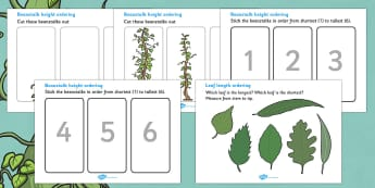 Beanstalk Height And Length Ordering Worksheets - beanstalk, height and length, sheet, worksheet, height, length, tall, small, big, little, long, short, activity, measurement, measuring