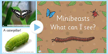 Minibeast What Can You See PowerPoint - minibeasts, power point
