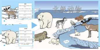 北极动物生活习性讲解幻灯片 - 冬天,季节,北极,动物,北极熊,野兔,生活习性