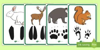 Amprentele aimalelor sălbatice Planșe - animale sălbatice, lumea vie, animale de pădure, corpul animalelor,Romanian