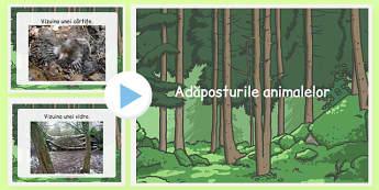 Adăposturile animalelor - Prezentare PowerPoint