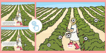 Strawberry Farm Picture Hotspots - strawberries, strawberry plants, strawberry farming, strawberry picking, strawberry plant life cycle