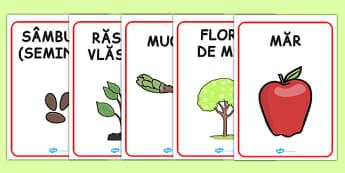 Cresterea plantelor, Planse cu vocabular - primavara, plante